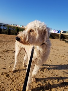 Alfie beach walk